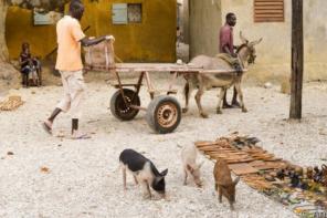 Senegal: il paese della Teranga
