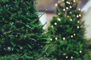 È tempo di alberi di Natale, quali sono i trend del 2018?