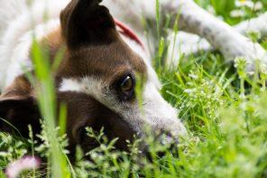NAPOLI: AL VIA IL PROGETTO DI SAVE THE DOGS