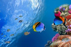Pesce d'Aprile, tra storia e leggende